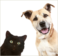 comox valley cat dog cremation services